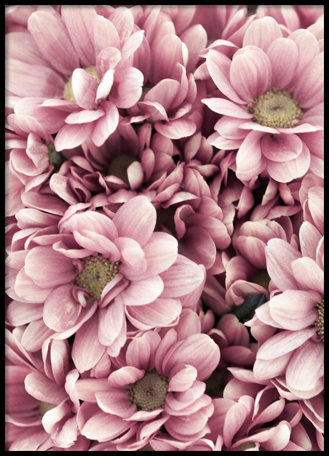 Tranh lẻ canvas Pink zinnia