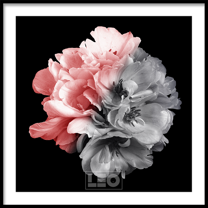 Tranh lẻ canvas Peony in black 02