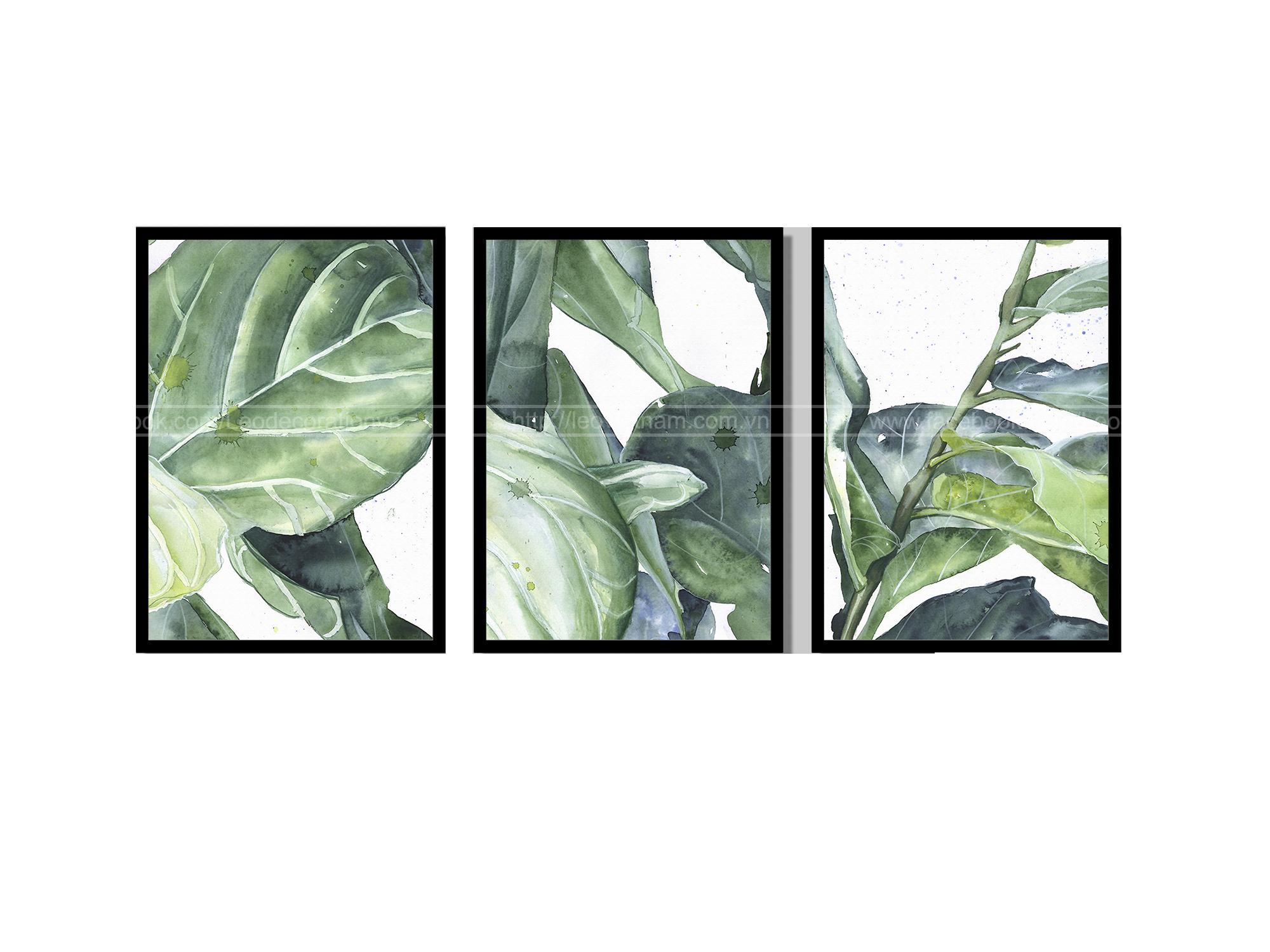 Bộ 3 tranh canvas Ficus Lyata