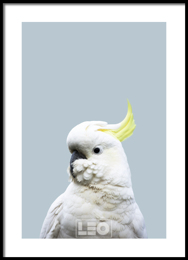 TRANH LẺ CANVAS WHITE PARROT