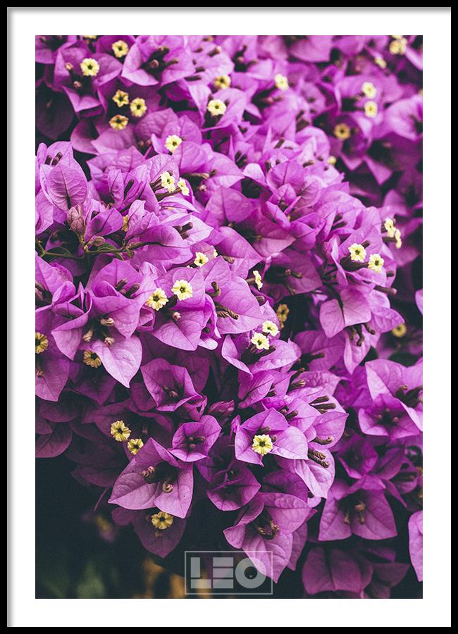 Tranh lẻ canvas Purple Confetti