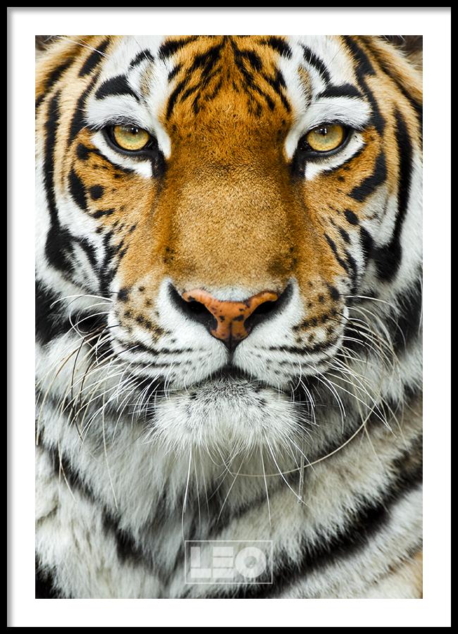 TRANH LẺ CANVAS TIGER