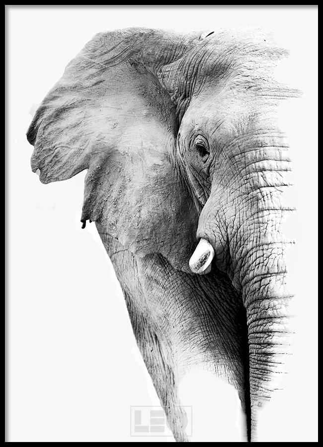 TRANH LẺ CANVAS ELEPHANT 1