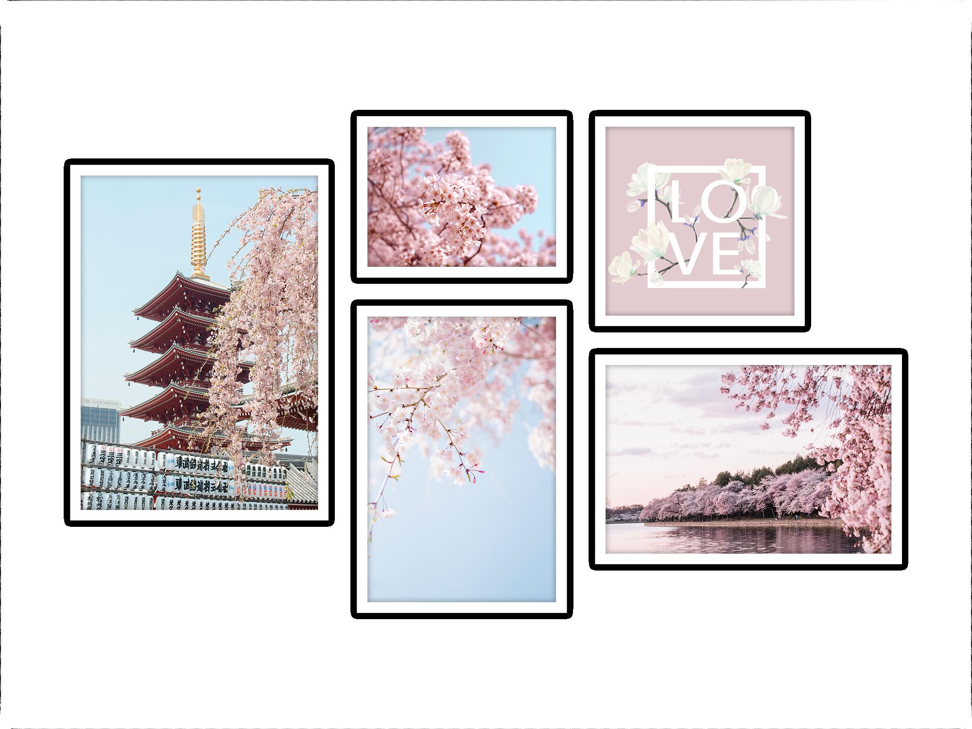 0305 JAPAN SAKURA