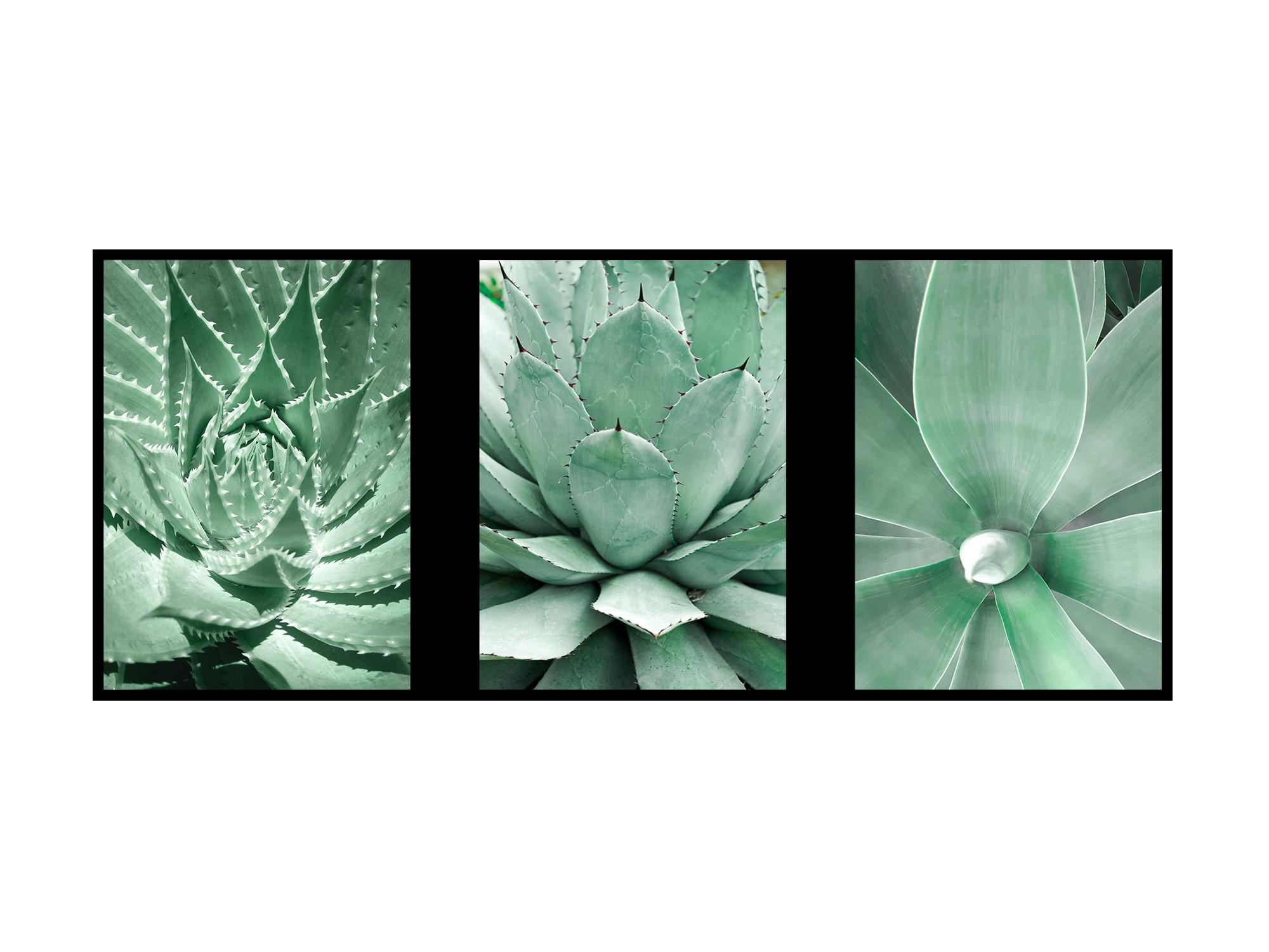 0312 Fern Succulent
